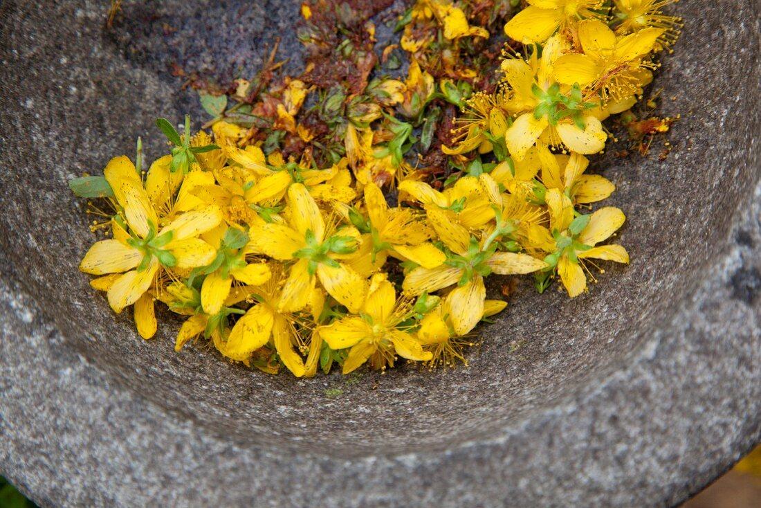 Fresh St. John's wort flowers in a mortar