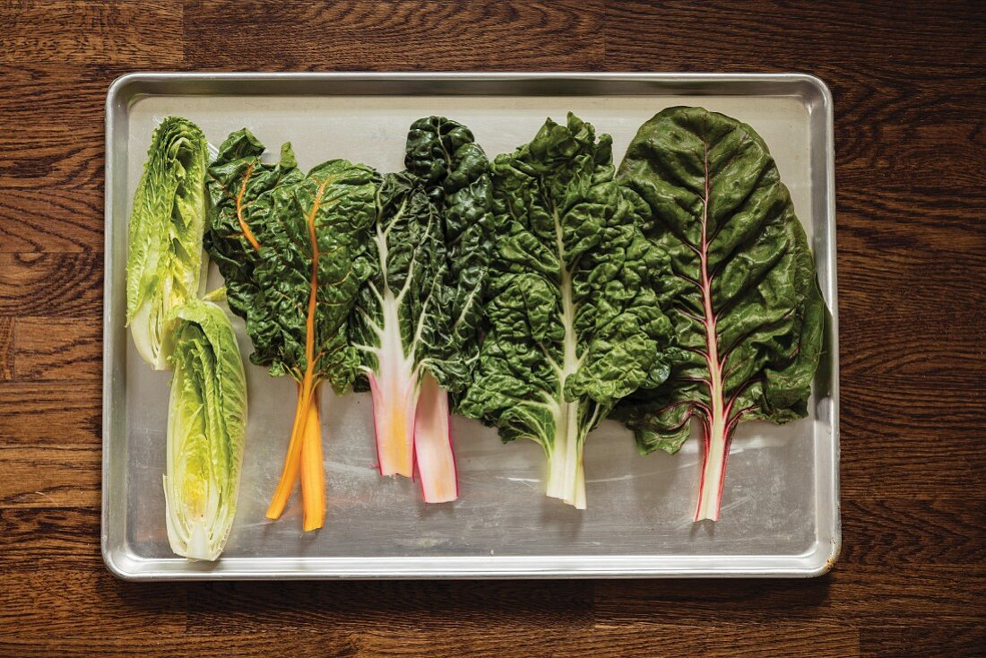 A variety of lettuce and chard leaves on a metal baking tray