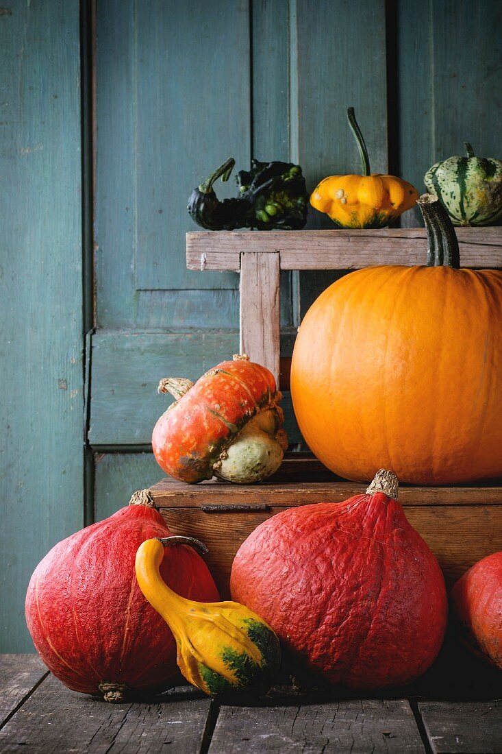 Assortment of different edible and decorative pumpkins on wooden chest over wooden background