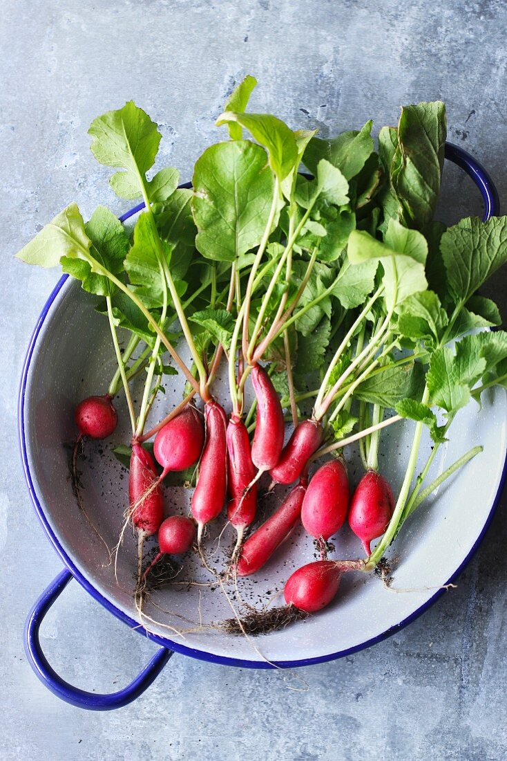 Freshly harvested radishes in an aluminium pan