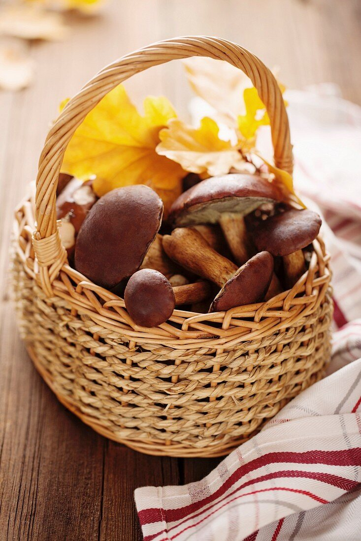 Basket of forest mushrooms bay bolete