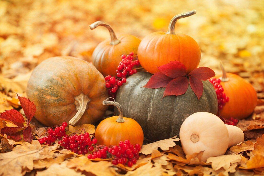 Pumpkins in a garden