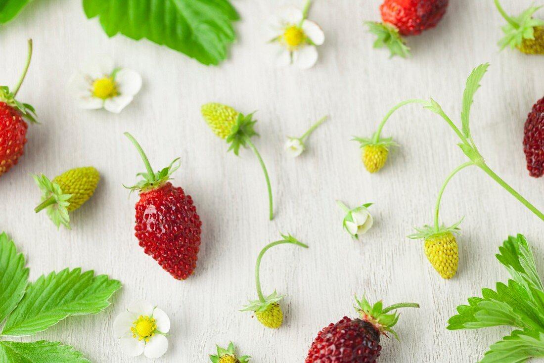 Homegrown Alpine Strawberries