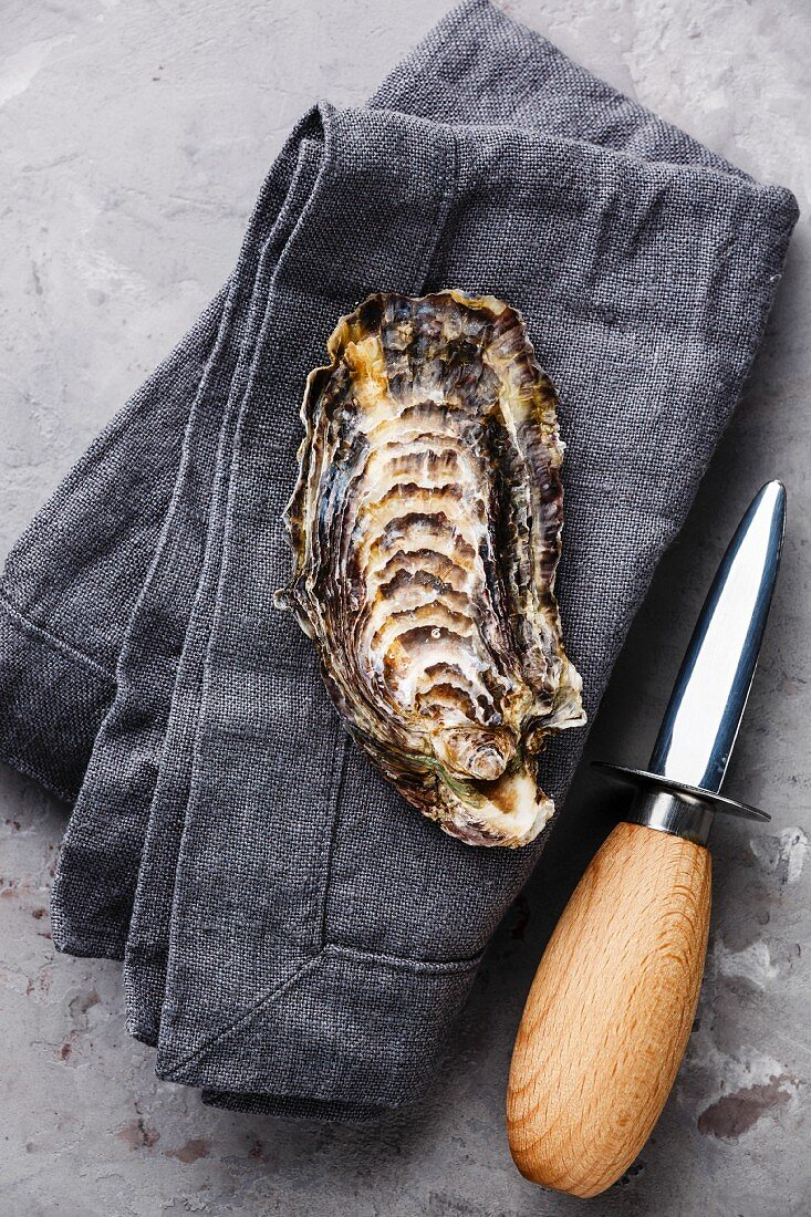 Open Oyster and oyster knife on gray napkin background