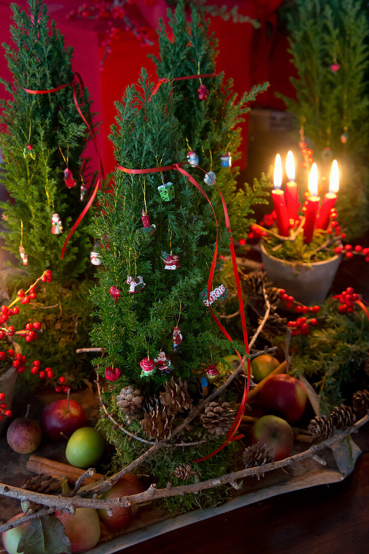 Christmas arrangement of terracotta pot, moss, four candles, holly and conifer branches