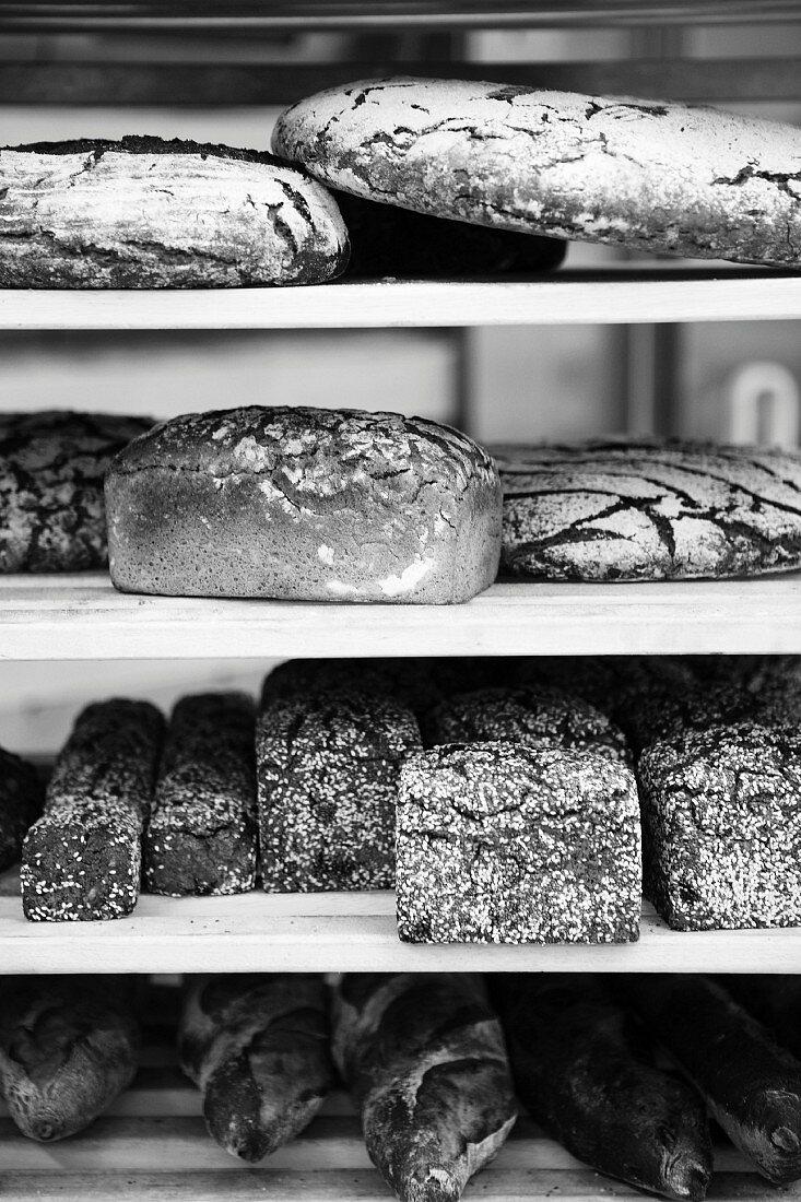 Various freshly baked breads on the shelf in a bakery