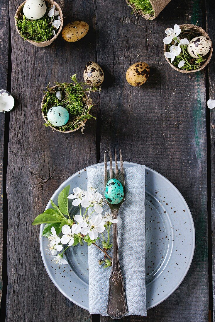 Table setting: colorful Easter quail eggs with spring cherry flowers, moss in garden pots, empty plates