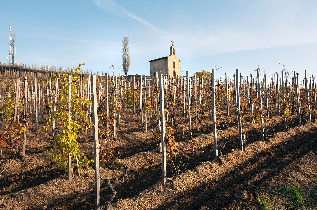 The vineyard of Chapoutier with the chapel behind it, the landmark of the Paul Jaboulet Aine winery