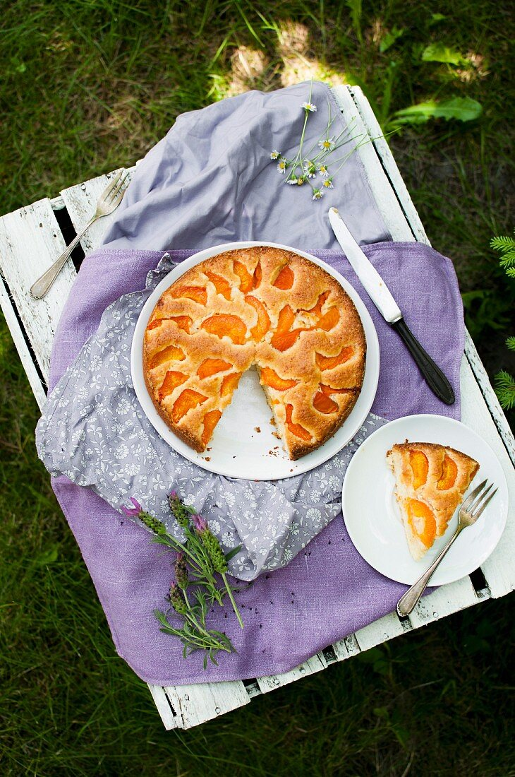 Simple cake with apricots, served in the garden on an old white box