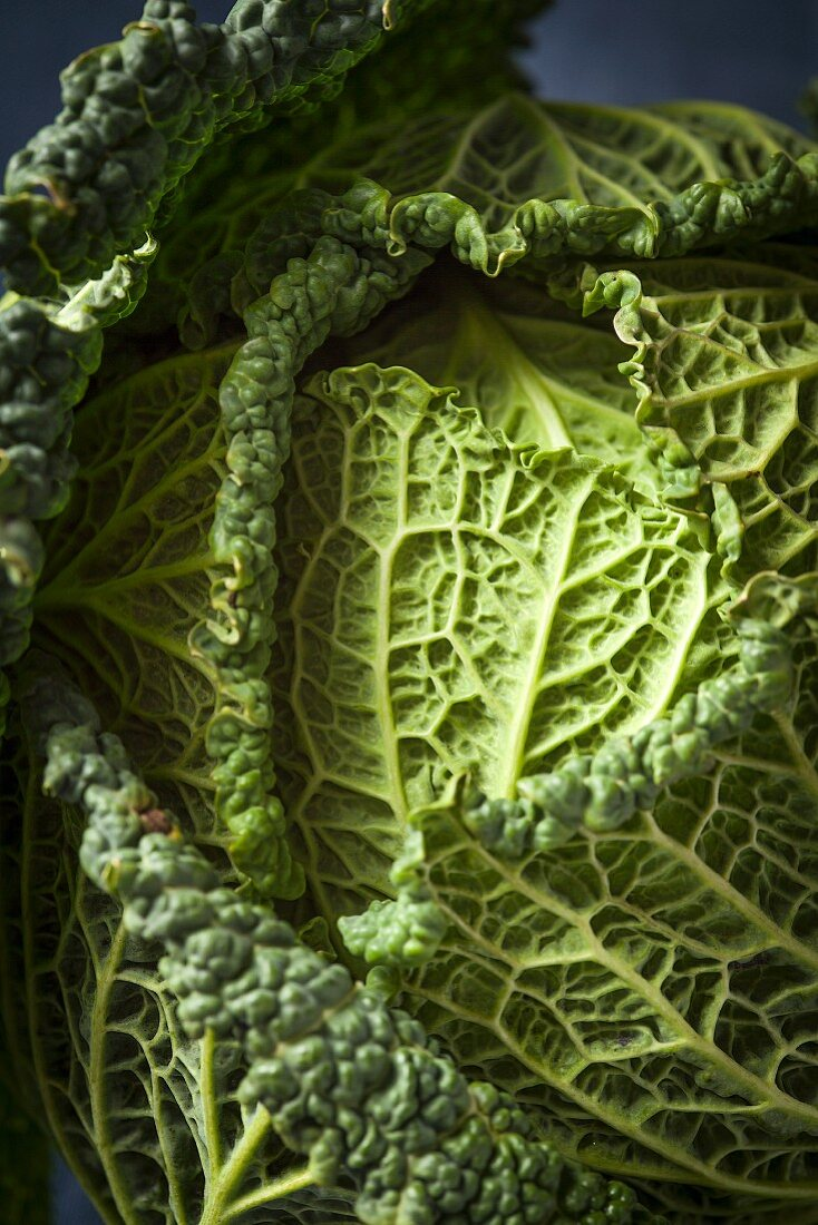 Savoy cabbage (close-up)