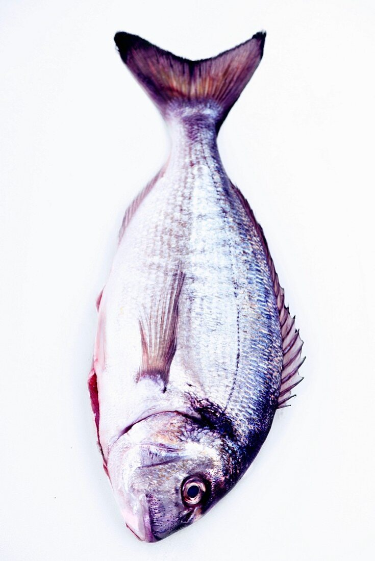 A whole sea bream with tail and side fins on a white background