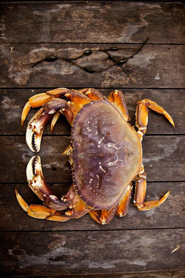 Softshell crab (New England, USA)