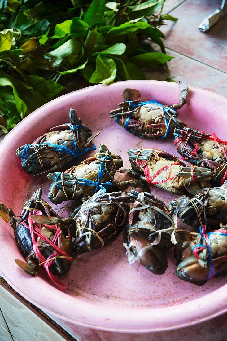 Tied crabs in a pink bowl at a fish market, Thailand