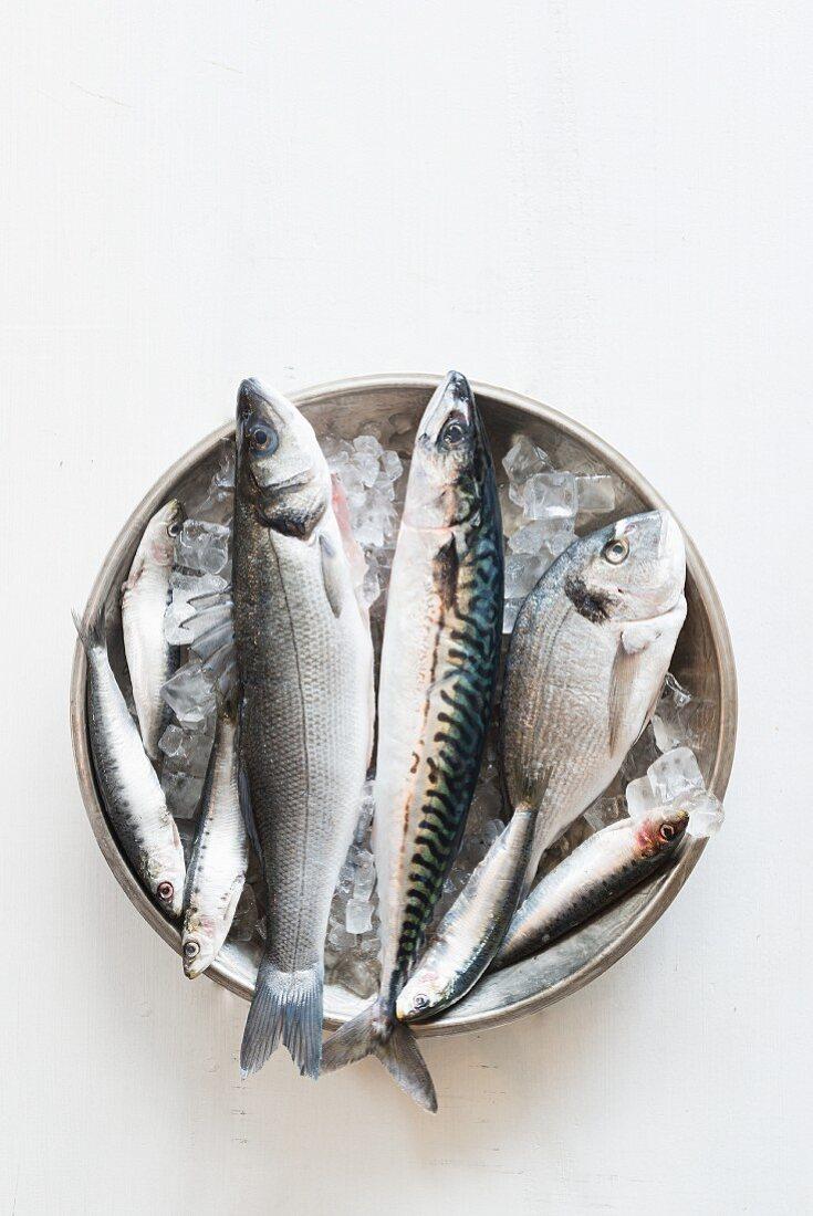 A bowl of fresh fish on ice - mackerel, sea bass, seabream and whitebait