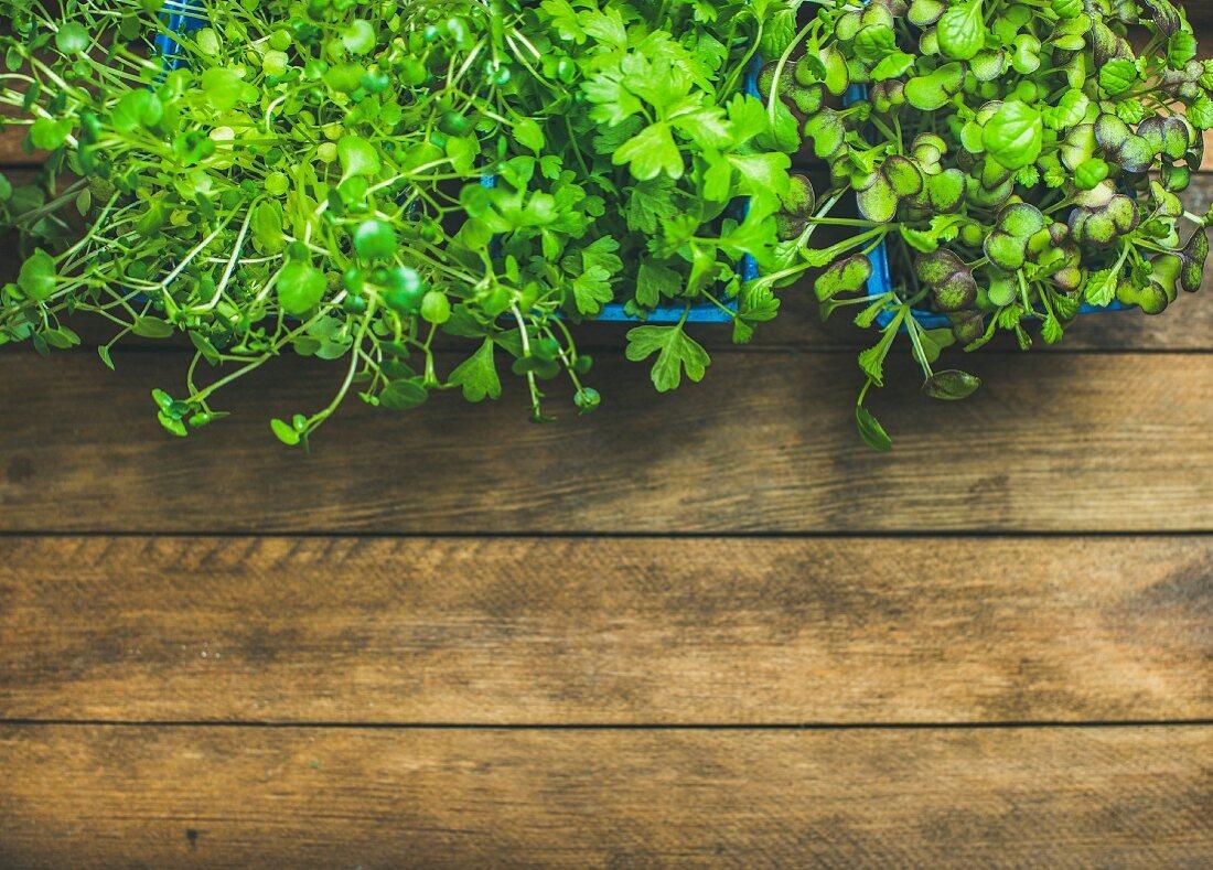 Gartenkresse, Brunnenkresse und Koriandersprossen in Plastiktöpfen auf Holzuntergrund (Aufsicht)