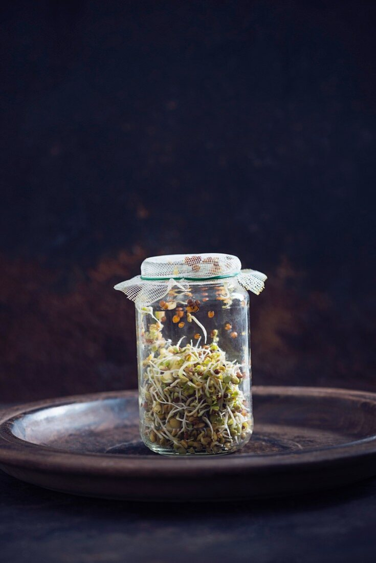 Sprouts in a glass jar (radish, lentil, buckwheat clover)