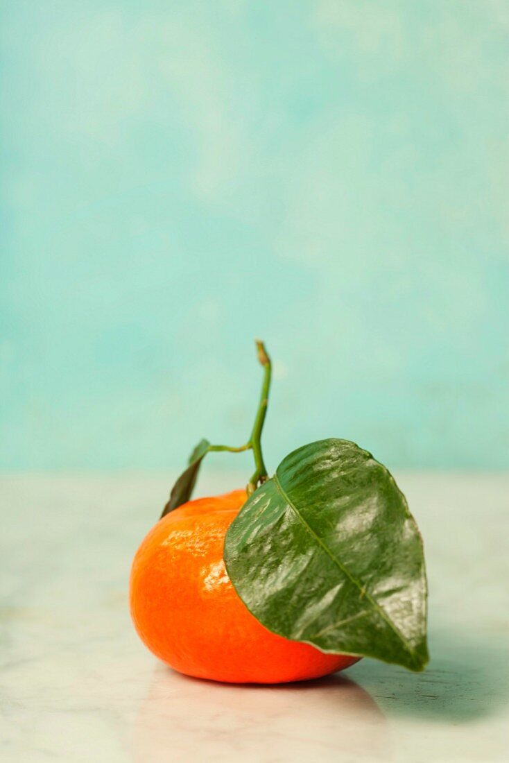 Fresh clementine with leaf on blue background