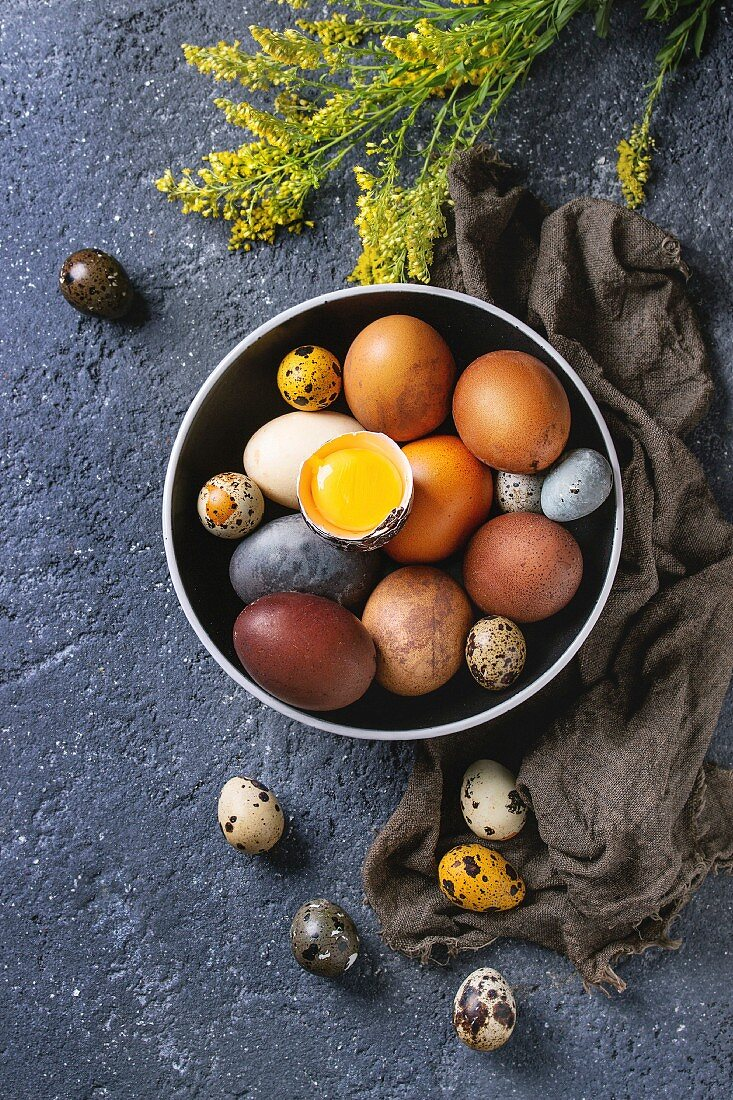Brown and gray colored chicken and quail Easter eggs in black ceramic bowl with yolk, yellow flowers, sackcloth rag over black concrete texture background