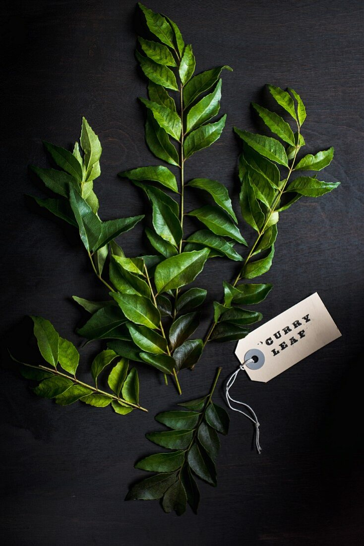 Fresh curry leaves against a black background (top view)