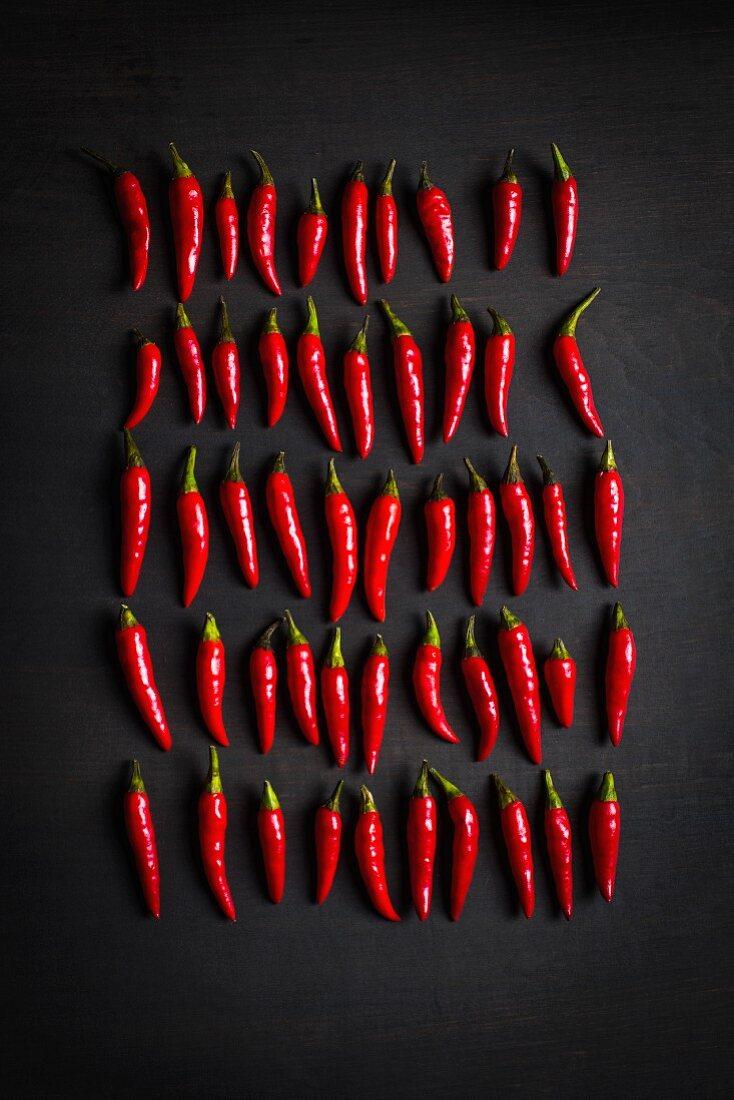 Rote Chilischoten in Reihen vor schwarzem Hintergrund (Aufsicht)