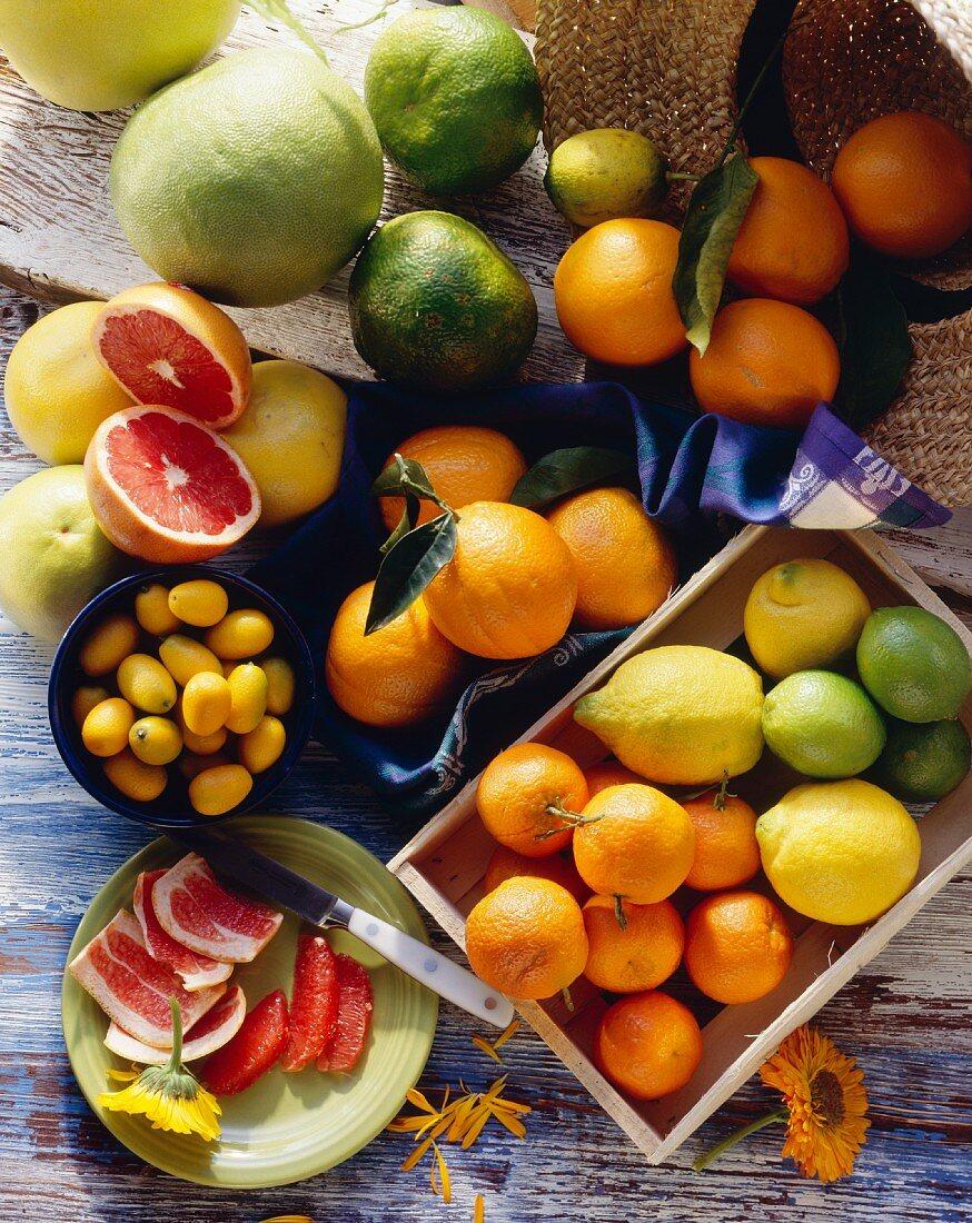 Assorted Citrus Fruit Still Life