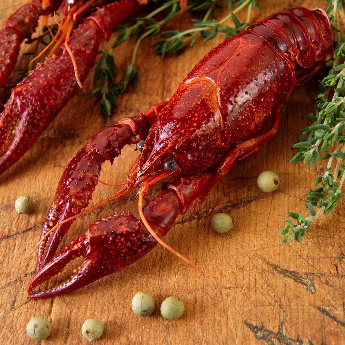 Boiled crayfish with herbs (close up)
