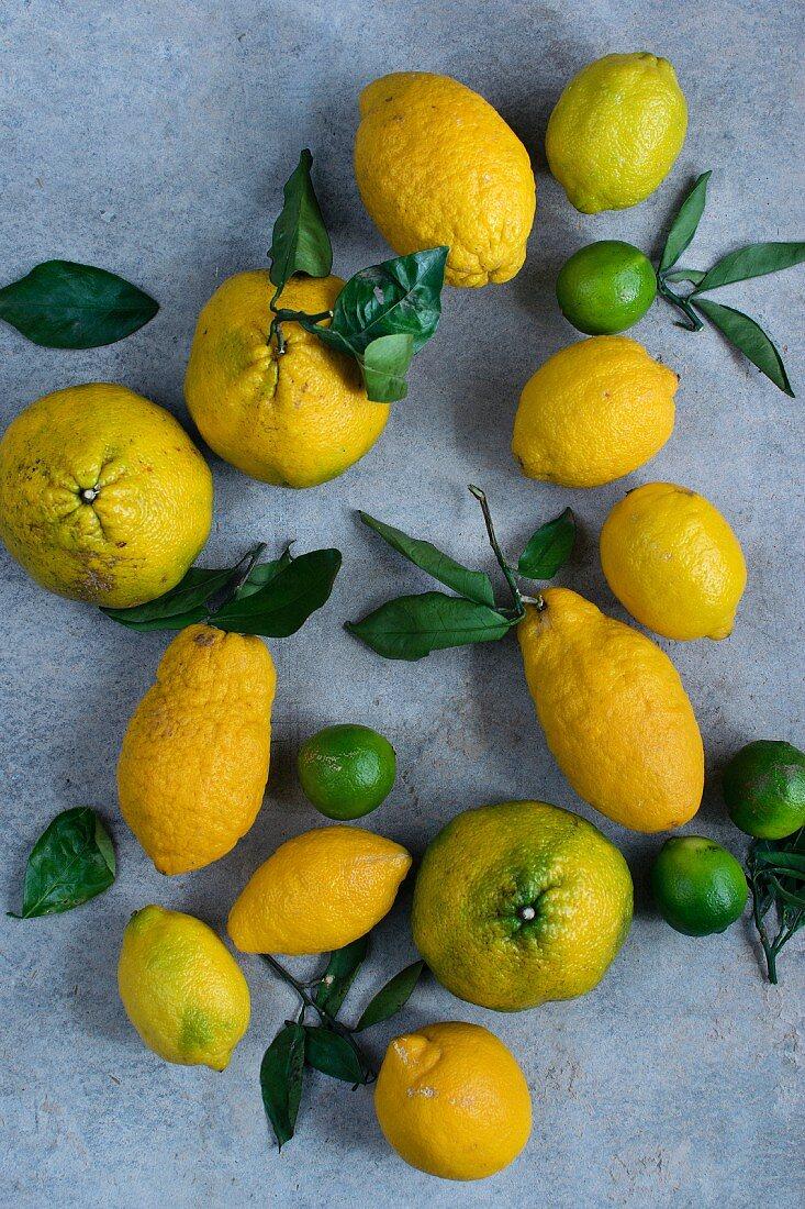 Lemons, limes and ugli fruit