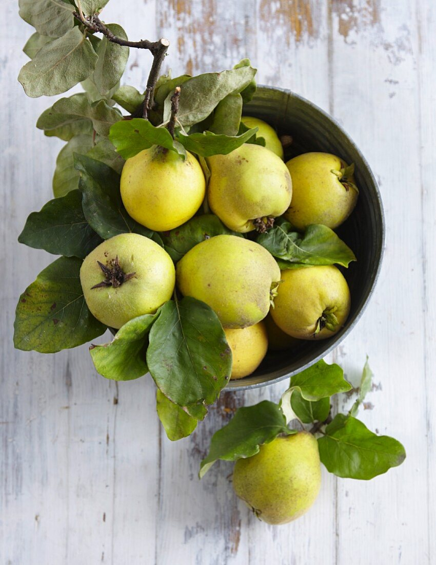 Quince with leaves in a bowl