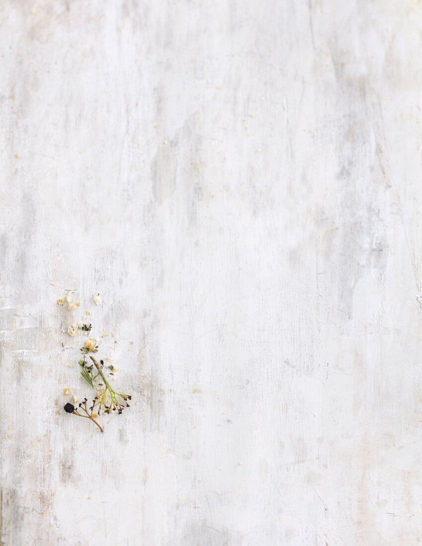 A bare aronia berry branch on a white wooden background