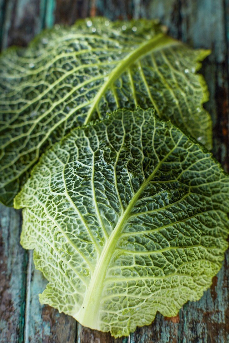 Two savoy cabbage leaves