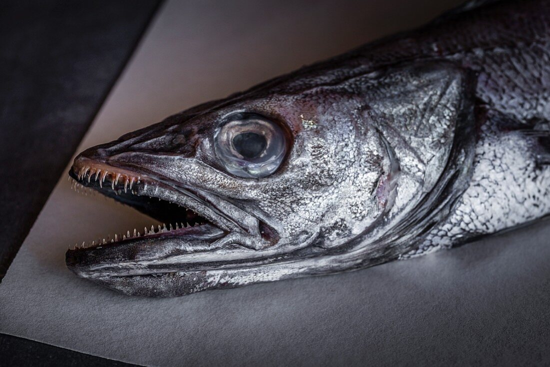 Partial view of a hake