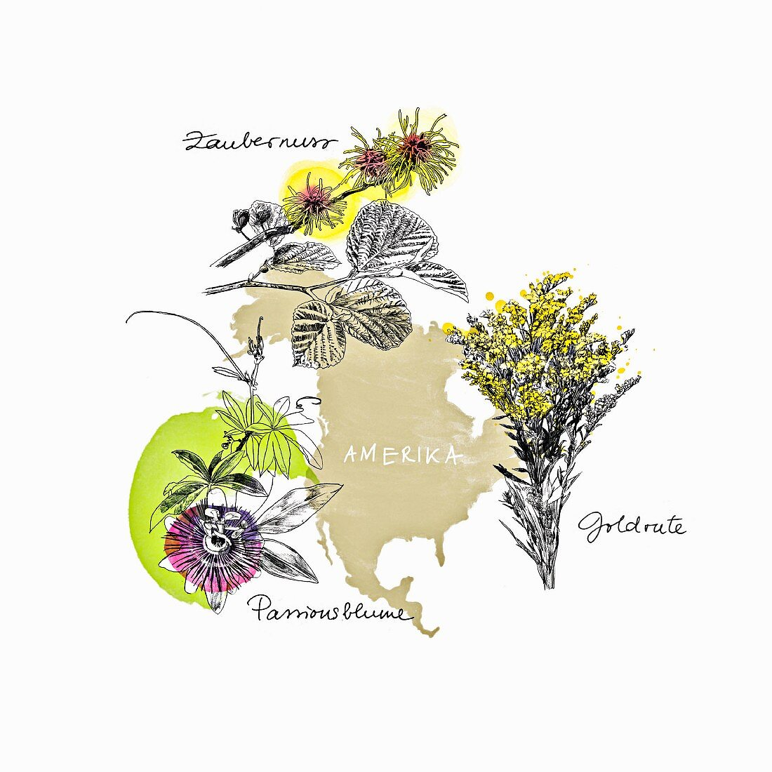 Medicinal herbs from America