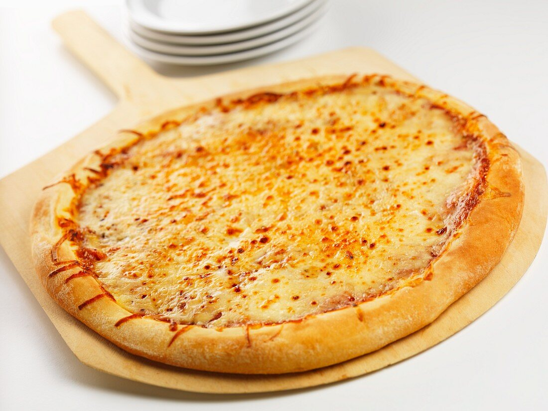 A whole cheese pizza on a pizza paddle