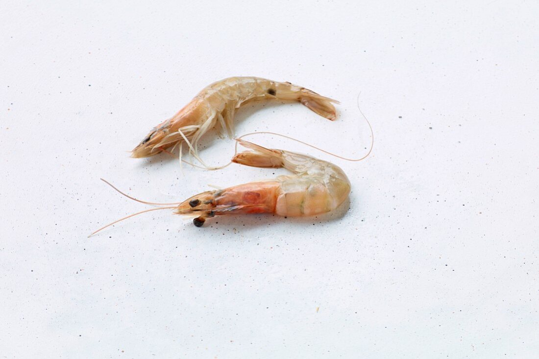 Two prawns on a white background