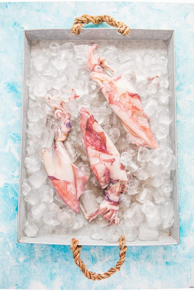 Squid and ice cubes on a tray