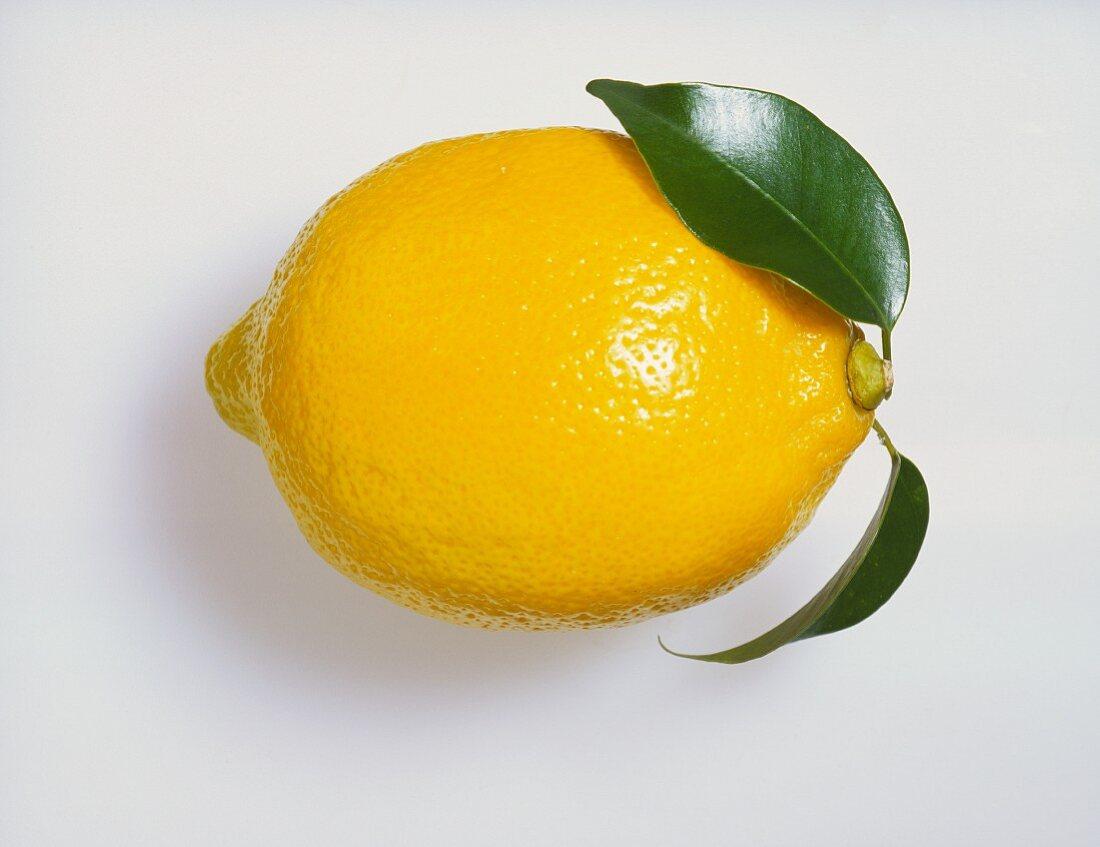 Whole Fresh Lemon with Leaf