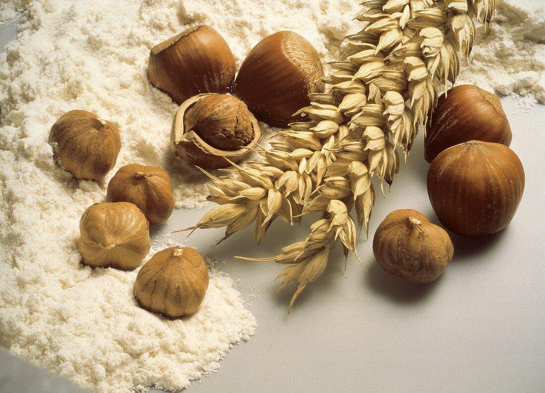 Still Life of Flour Wheat and Hazelnuts