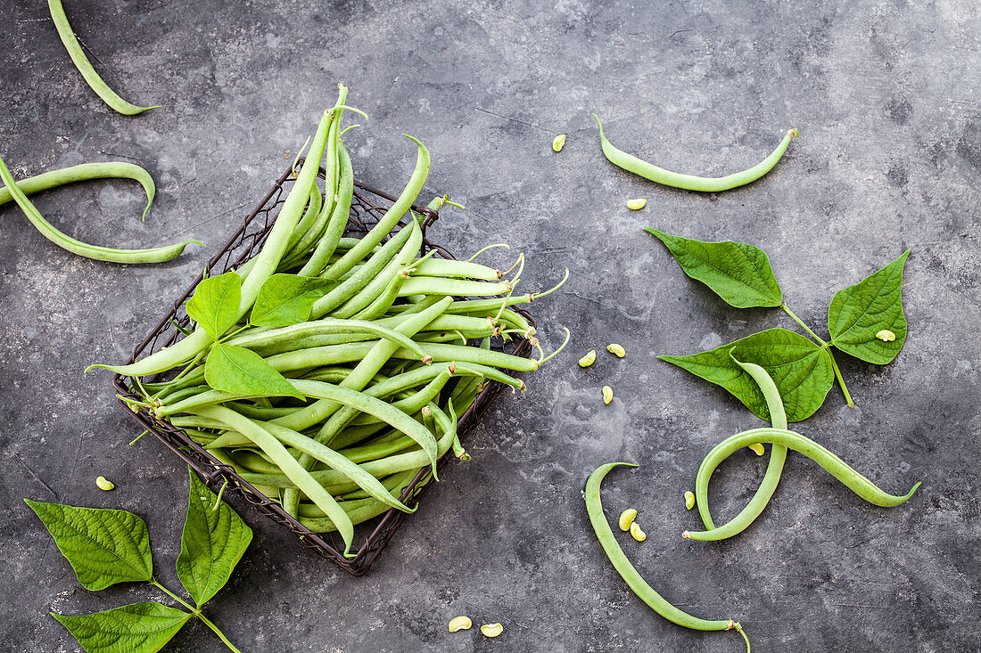 Green beans picked from the garden