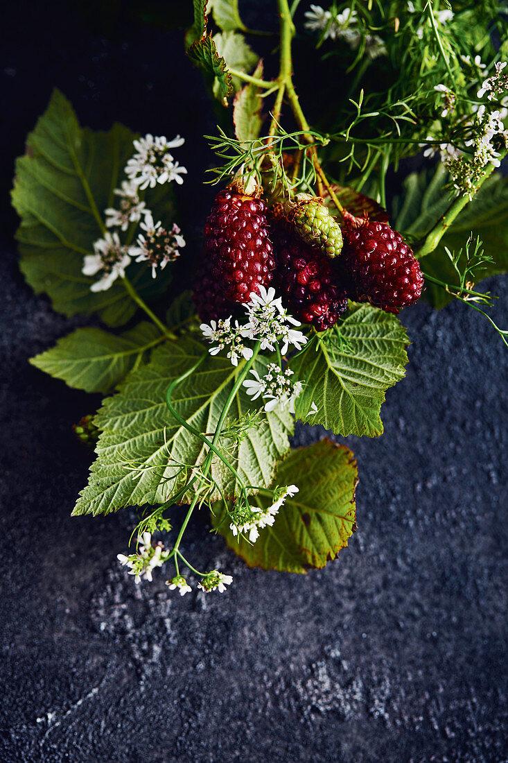 Freshly harvested boysen berries