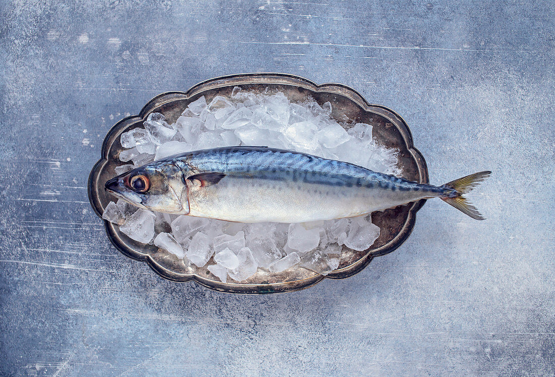 Raw mackerel on ice