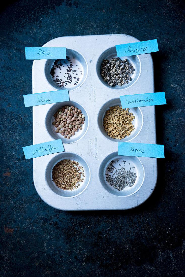 Red cabbage seeds, chard seeds, lentil seeds, alfalfa seeds, cress seeds, fenugreek seeds