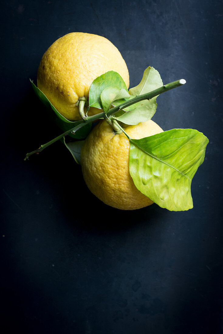 Citrons on a branch with leaves