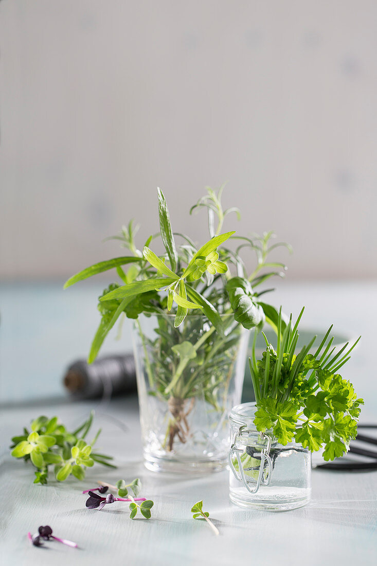Various Fresh Herbs in a Glass