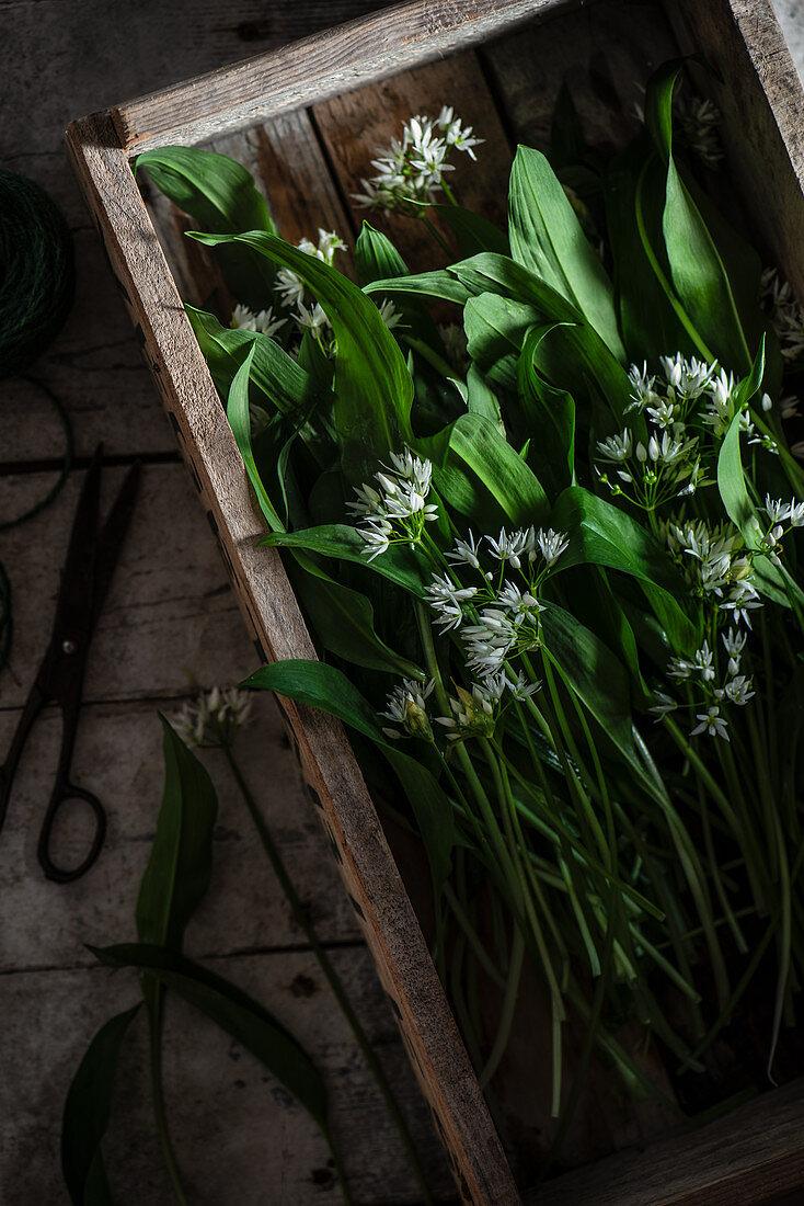 Wild garlic in a wooden crate