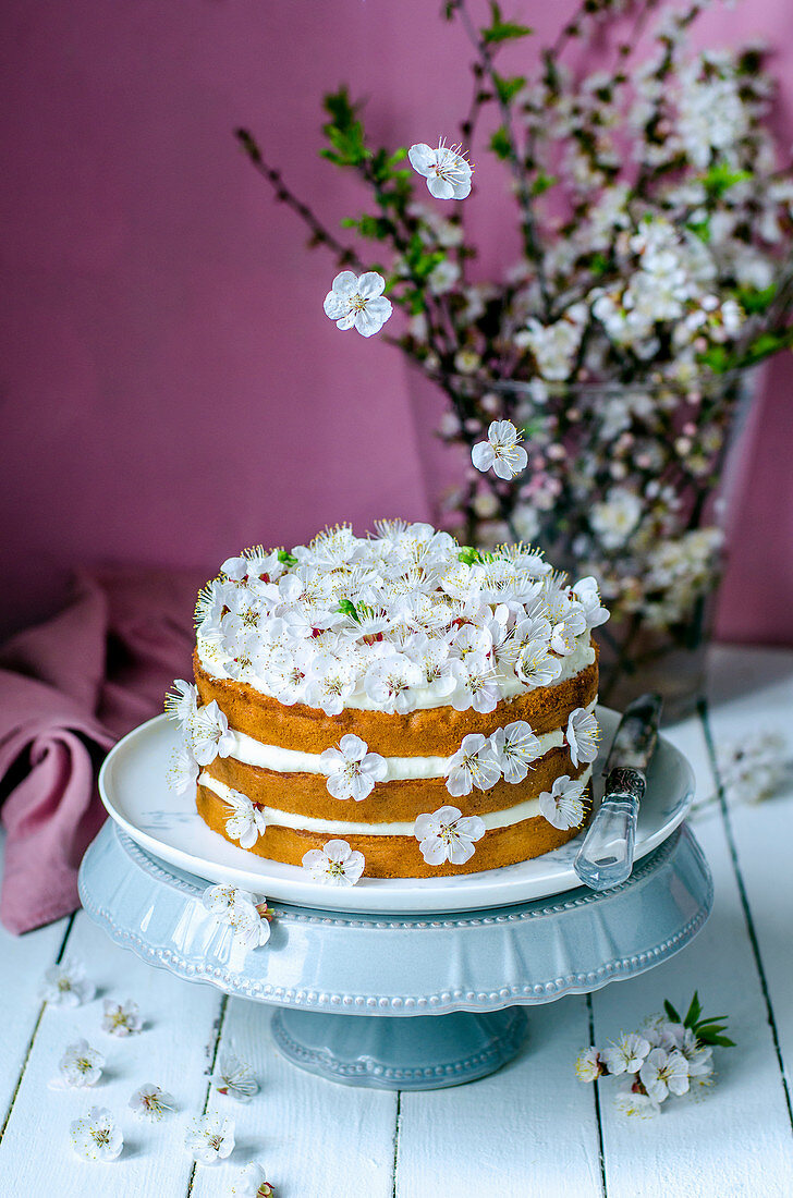 Biscuit cake with butter cream, decorated with apricot flowers. Against the background with apricot flowers