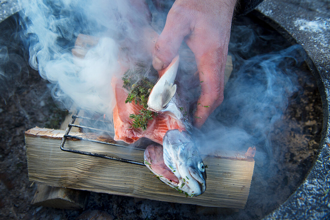 A winter barbecue: salmon trout being smoked with juniper berries (Norway)