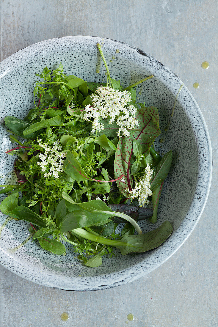 Young lettuce with elderflowers