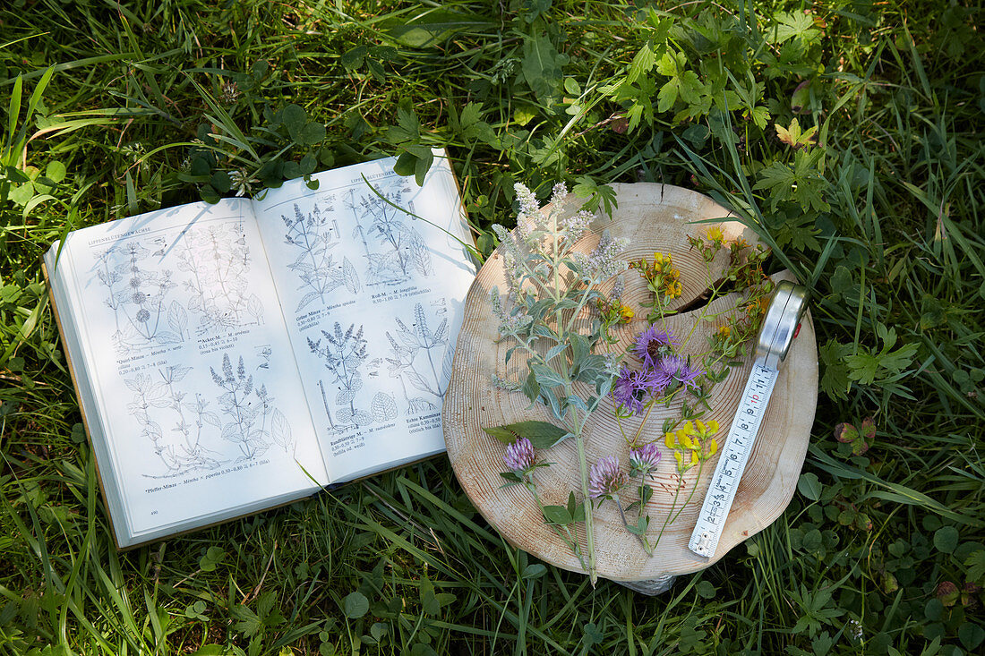 Fresh wild herbs next to a plant identification book in the grass