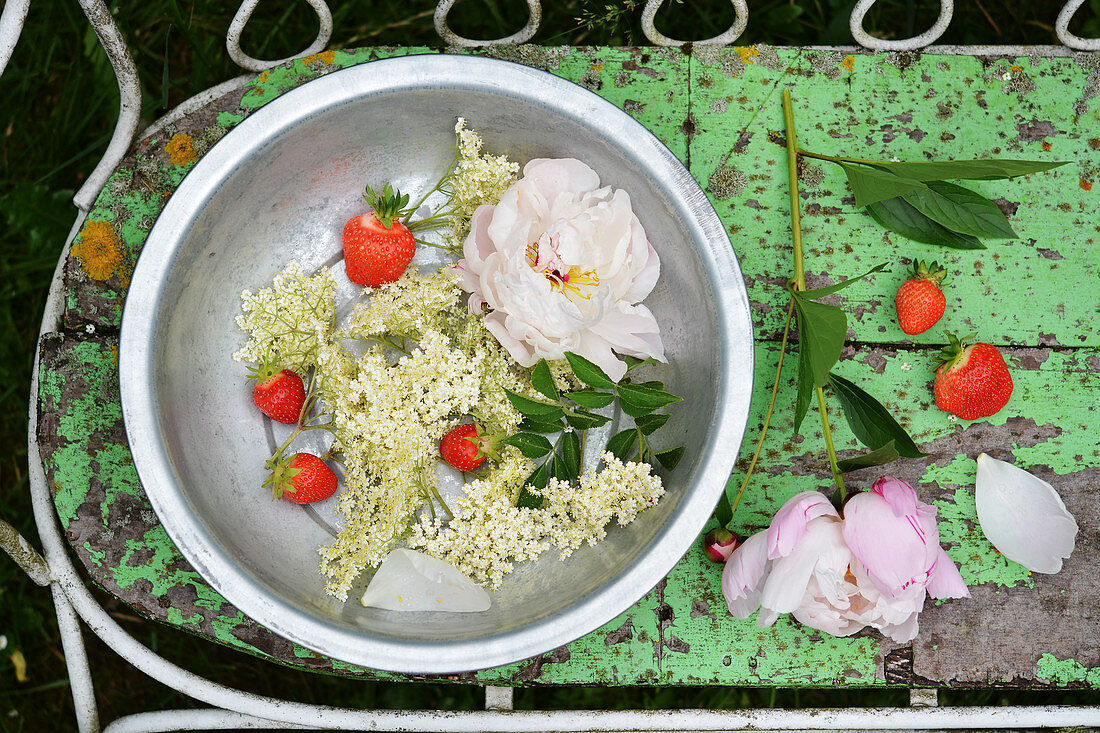 Elderflower with strawberries and peonies in a bowl in a garden
