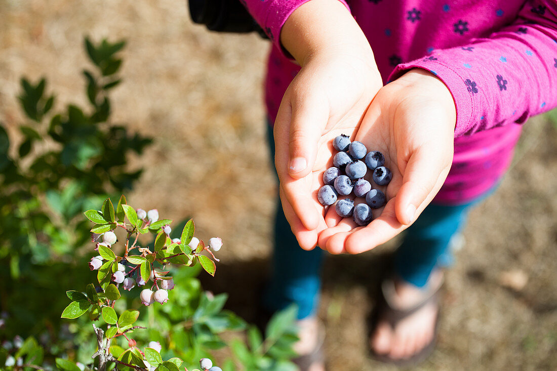 A child holding blueberries